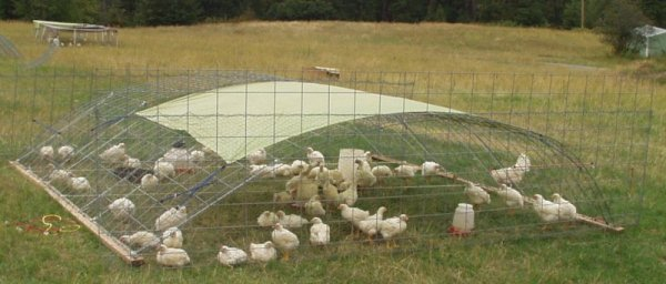portable chicken pen made from stock panels